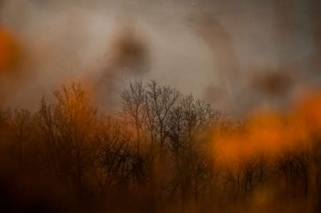 Abstract double layered autumn landscape