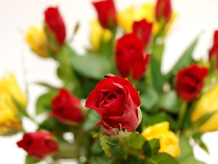 Bouquet of red and yellow roses photo