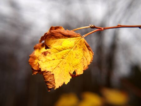 Last leaf on tree at autumn, closeup, with fine bokeh Stock Photo - 16428715