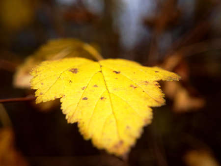 Last leaf on tree at autumn, closeup, with fine bokeh Stock Photo - 16422683