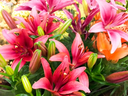 Bouquet of beautiful lilies with buds and green leaves