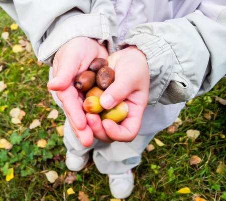 Young child holding a pile of oak nuts at autumn Standard-Bild
