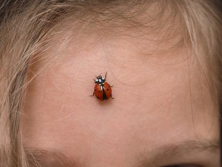center position: Closeup of ladybird bug on forehead walking towards hair