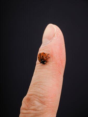 downwards: Ladybird walking downwards on a finger isolated towards black background Stock Photo
