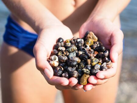 sea slug: Young female person with hands full of salt water snails on the beach Stock Photo
