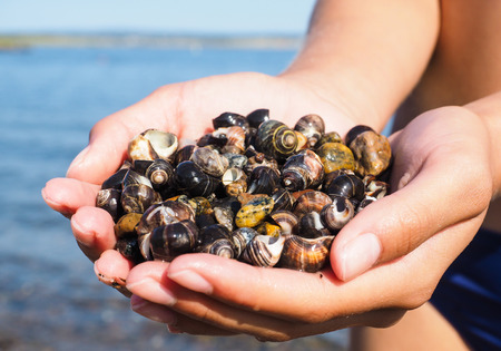 salt water: Young female person with hands full of salt water snails on the beach Stock Photo