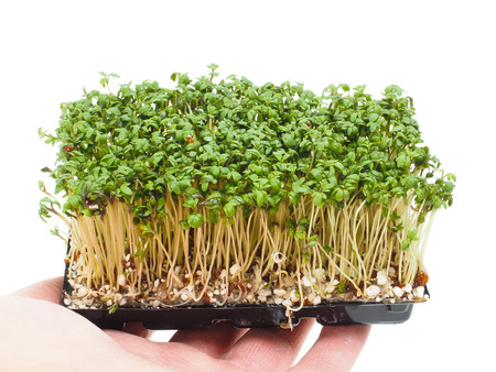 watercress: Person holding a tray of watercress up close