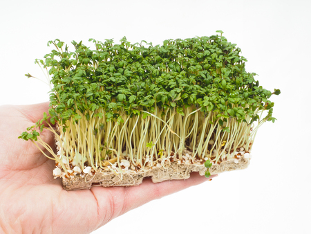 aquatic herb: Person holding a tray of watercress up close