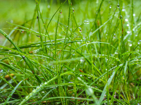 Water droplets on grass from rain at early morning up close Lizenzfreie Bilder