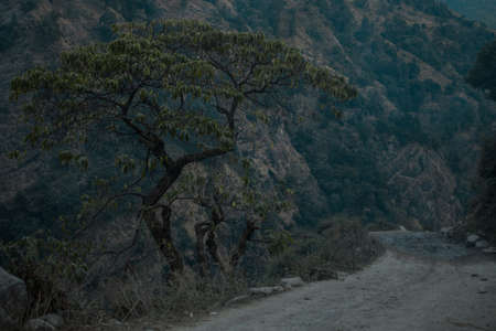 Single beautiful tree by the side of a dirt road in the moody mountains