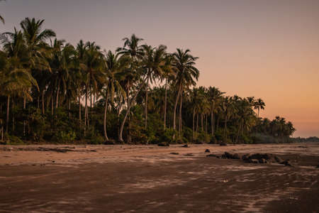 Palm trees on a sand beach during sunset, peace and quiet, serene solitude near Ngwesaung, Irrawaddy, western, Myanmar