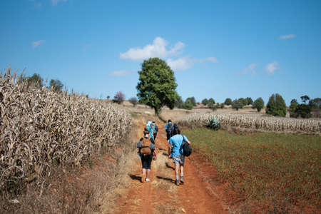 A tourist group with backpacks walks on a dirt road between corn and chili fields on a hike from Kalaw to Inle Lake, Shan state, Myanmar