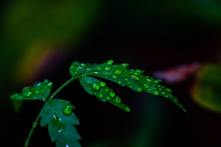 WaterDroplets on Leaves 스톡 콘텐츠
