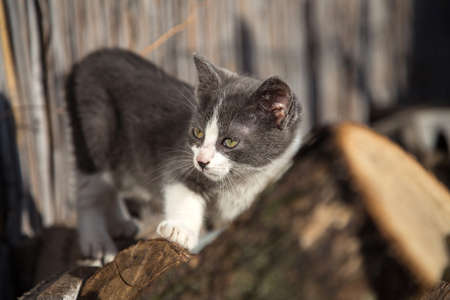 meticulous: Cat outside looking