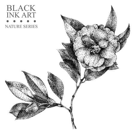 Illustration with flower camellia drawn by hand with black ink. Graphic drawing, pointillism technique. Floral element for design