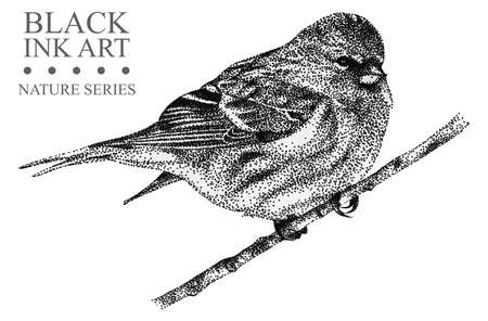 Illustration with bird Redpoll drawn by hand with black ink. Graphic drawing, pointillism technique. Floral element for design Stock Photo