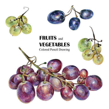 Illustration with multicolored grapes drawn by hand with colored pencil. Drawing with crayons. Fresh tasty berries painted from nature Stock Photo
