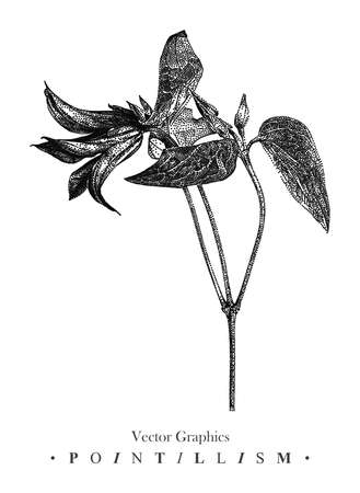 Vector illustration with clematis flower drawn by hand. Graphic drawing, pointillism technique. Black and white floral element for design.
