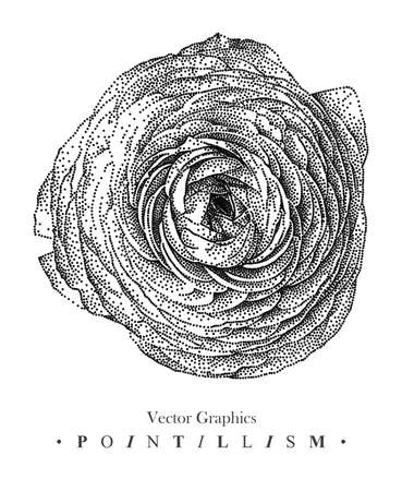 Vector illustration with pion-shaped rose flower drawn by hand. Graphic drawing, pointillism technique. Black and white floral element for design