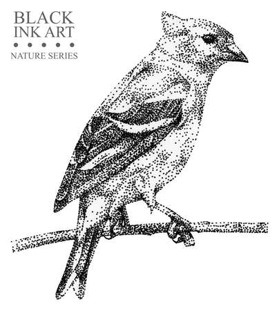 Illustration with bird Siskin drawn by hand with black ink. Graphic drawing, pointillism technique. Floral element for design