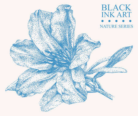 Illustration with flower Azalea drawn by hand with black ink. Graphic drawing, pointillism technique. Floral element for design Banque d'images