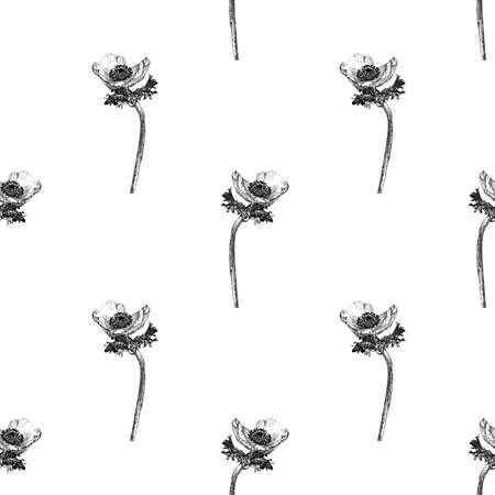 Vector seamless pattern with anemone flower isolated on white background drawn by hand. Graphic drawing, pointillism technique. Botanical natural collection. Black and white floral illustration