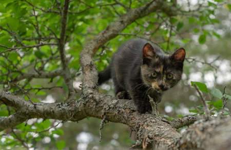 Kitten sneaking on the tree Standard-Bild