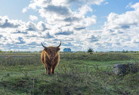 Wyżynna Krowa w lesie