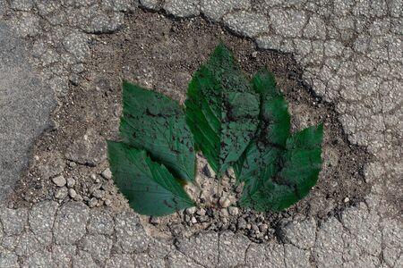 Ein Schlagloch in der Straße. Ein Loch im Boden mit grünen Blättern Silhouette.Outdoor. Standard-Bild