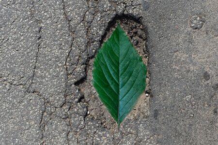 Ein Schlagloch in der Straße. Ein Loch im Boden mit grünen Blättern Silhouette.Outdoor.