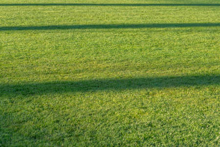 Texure of green grass field lawn with lighting signs at the soccer stadium outdoors.Selective focus.Copy space. Stockfoto