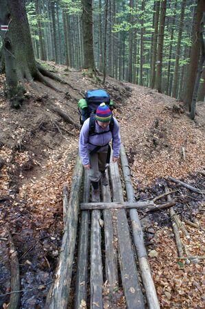 rambler: Woman wandering along the mountain by a beech forest