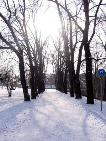 Winter path_color