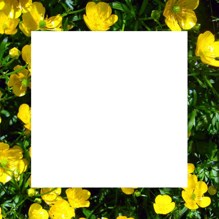Buttercup Notecard_white