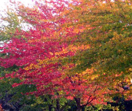 Autumn trees changing color