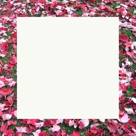 red leaf note card_solid white Banco de Imagens