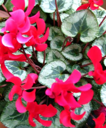 Red flowers Banco de Imagens