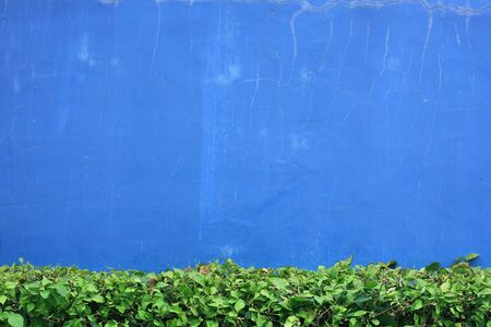 blue wall: blue wall and green leaf