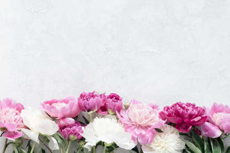 Peonies on bright gray concrete background with copy space. Wedding, gift, feminine cards, design or mockup projects. Desaturated effect Stock Photo