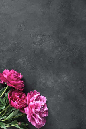 Beautiful magenta peonies on dark stone background. Floral frame or floral background with copy space for text. Gift, holidays, present or floral card concept