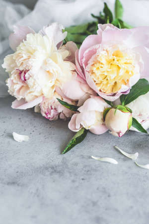 Beautiful pastel peonies on grey concrete background. Wedding, birthday, valentines day, gift or womens day concept Stock Photo