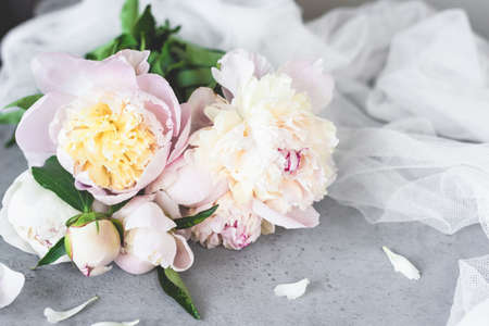 Pink White Pastel Peony Flowers On Grey Concrete Background. Wedding, birthday, valentines day, gift or womens day concept