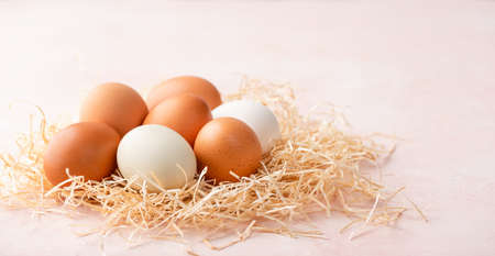 Chicken eggs in nest on pink background with copy space for text or design. Different color eggs