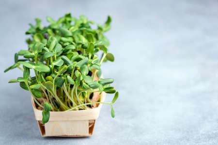 Micro greens sprouts in basket 版權商用圖片