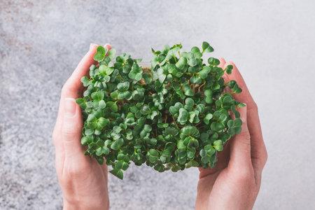 Microgreens in female hands