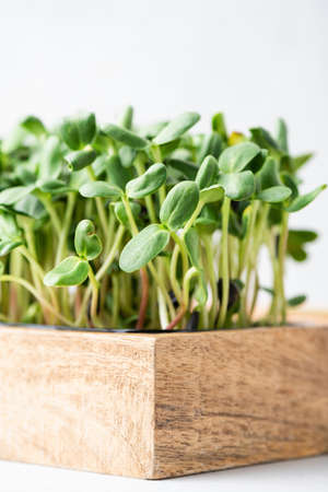Micro greens in wooden box