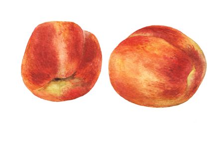 Peaches. Hand drawn watercolor painting