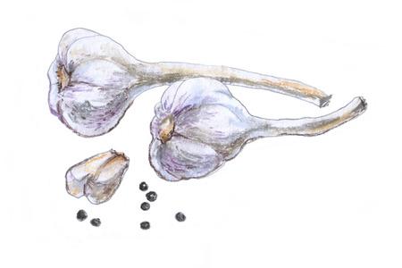 Garlic . Pastel drawing on white background.