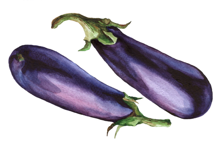 Eggplant. watercolor painting on white background.
