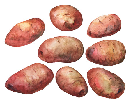 painted watercolor illustration of potatoes on white background